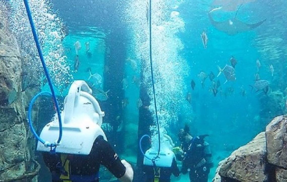 Parques Aquáticos de Orlando. 3 experiências pagas que valem a pena no Discovery Cove