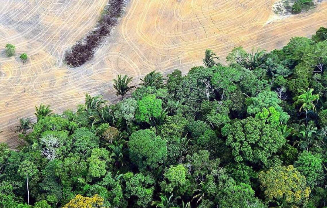 Diagnóstico elaborado por 120 cientistas alerta para importância da biodiversidade
