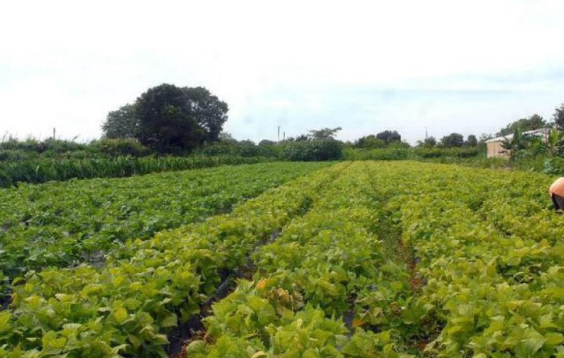 Adesão ao Programa de Regularização Tributária Rural tem novo prazo