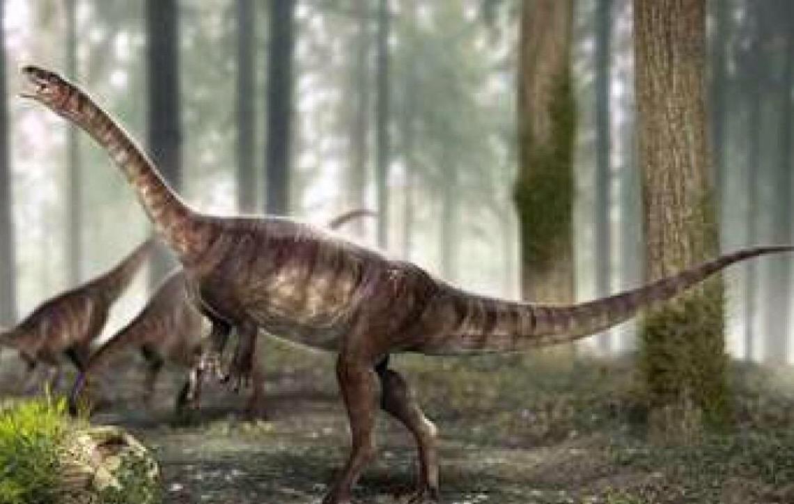 Descoberta espécie inédita de dinossauro no Brasil