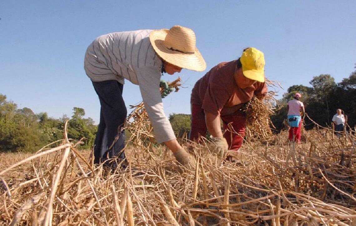 Resultado de imagem para Mulheres já controlam 40% das agroindústrias do DF