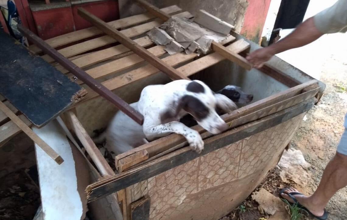 Cães explorados para caça são encontrados dentro de caixa no DF