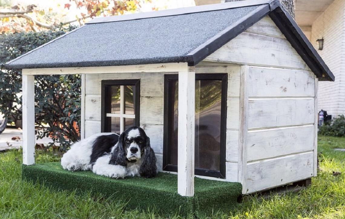 Veterinário conta problemas de viver com animais em apartamento e casas pequenas