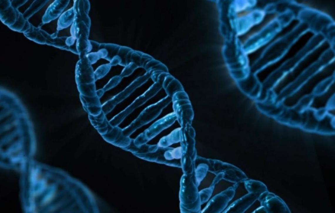 UNESCO alerta para aplicação imprudente de modificação genética