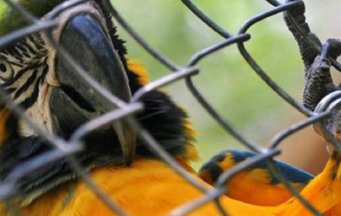 Inpa e Polícia Federal farão parceria contra caça ilegal e tráfico de animais silvestres