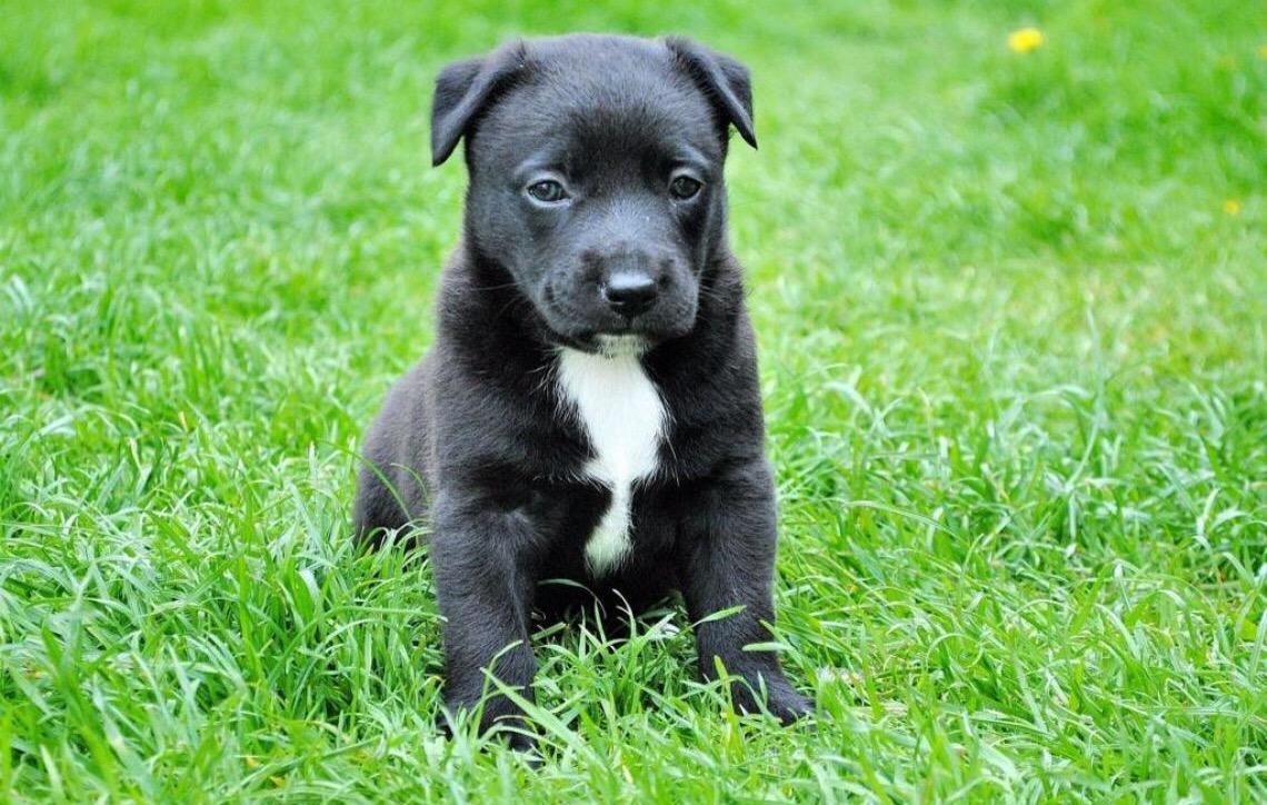 Animal de estimação morre pouco depois de ser adquirido e comprador deverá ser ressarcido
