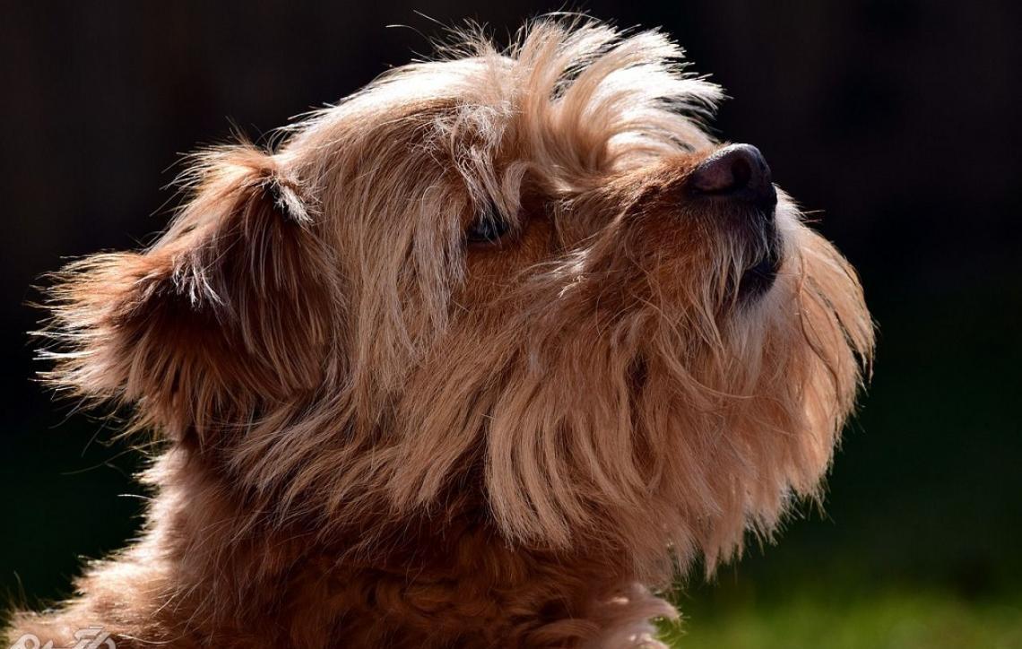 Conheça os tipos de pelos de cachorro e saiba como cuidar de cada um