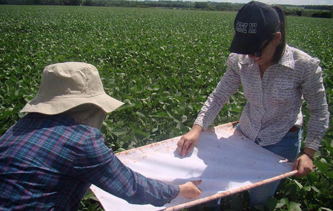 Manejo Integrado de Pragas poderia economizar R$4 bilhões na produção nacional de soja