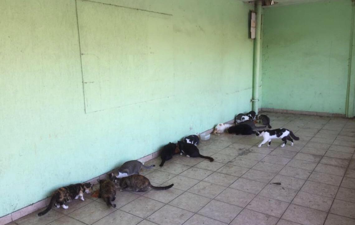 Gatos são envenenados em unidade do Carrefour do Rio de Janeiro