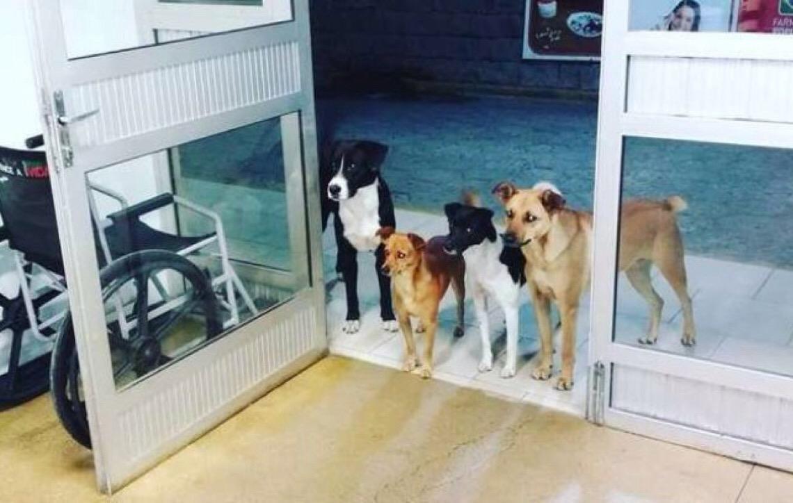 Cães aguardam em frente a hospital morador de rua ser atendido