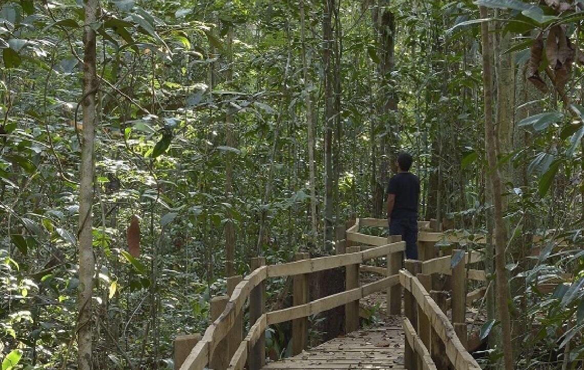 Parque Nacional do Pau Brasil lança aplicativo de apoio à visitação