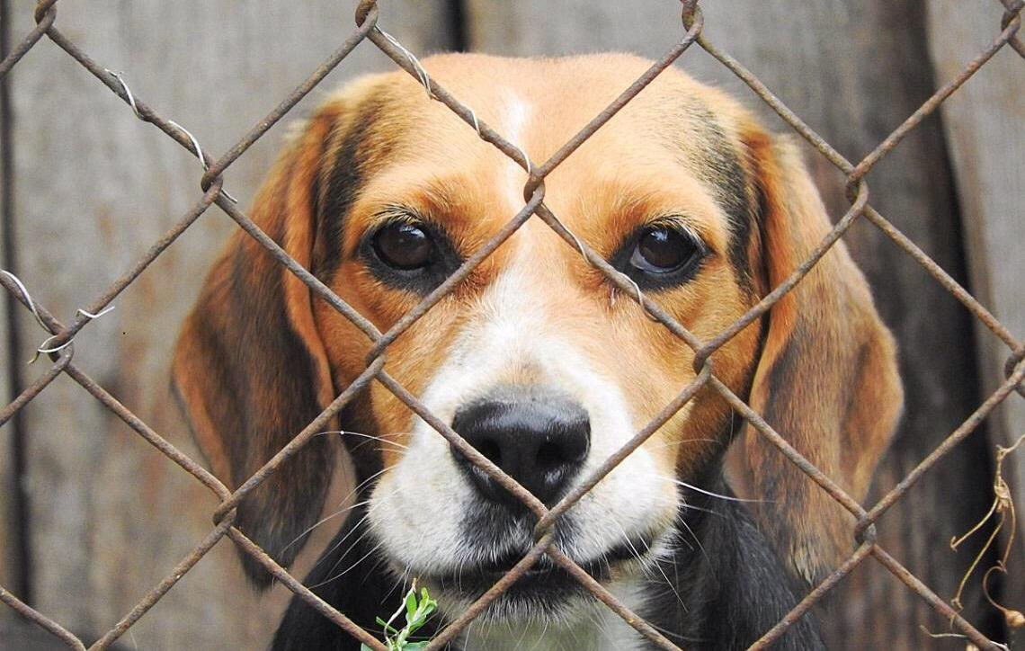 Grã-Bretanha proibirá vendas de filhotes de cães e gatos em pet shops