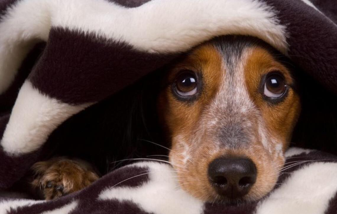 Animais exigem atenção redobrada com a saúde durante a queima de fogos do Réveillon