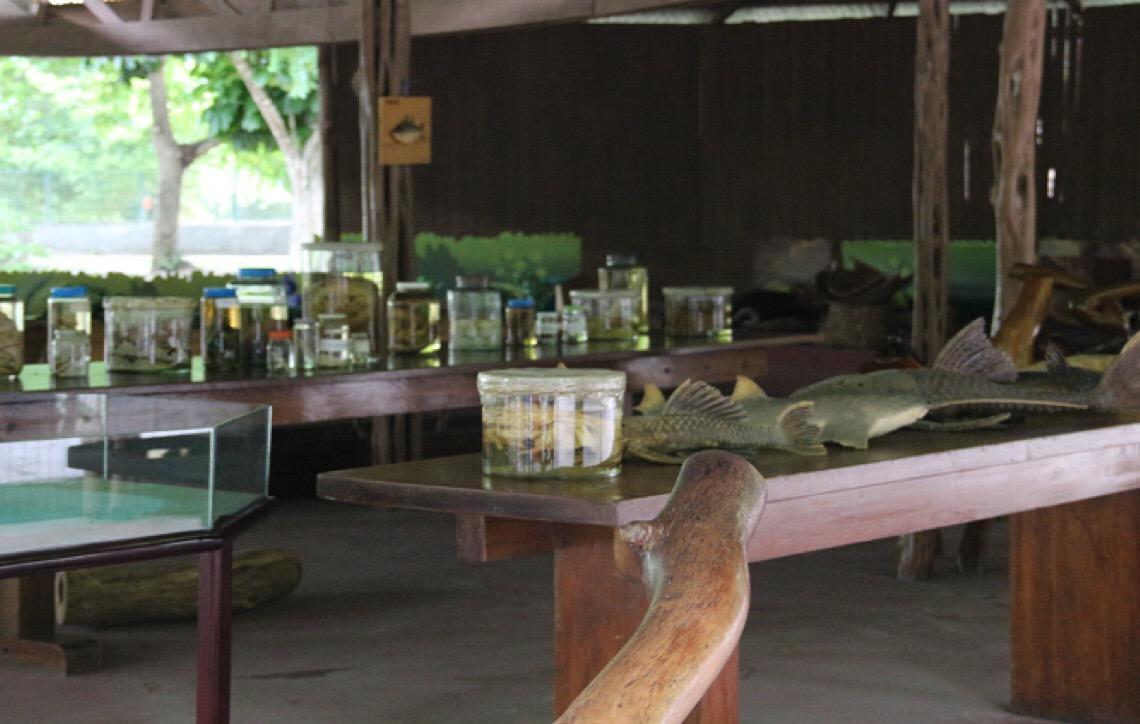 Bosque da Ciência da Amazônia é opção de lazer e contato com a natureza