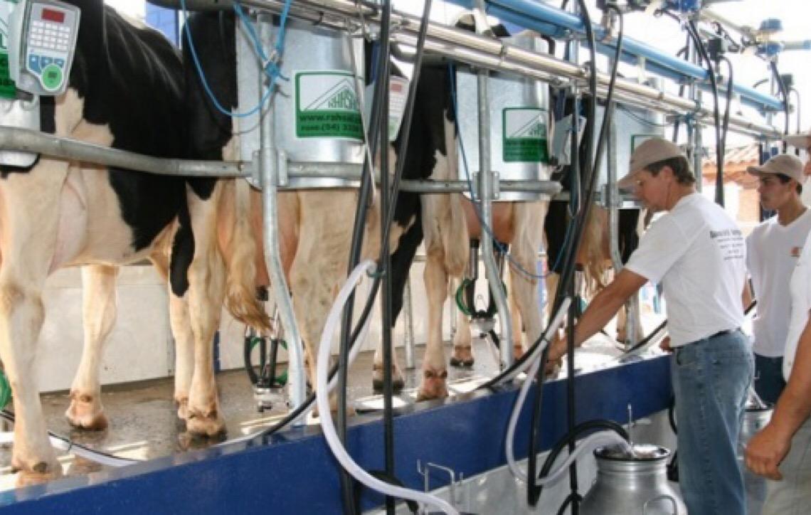Produção de leite deve crescer 2,5% no país e 6,6% em MT, diz Imea