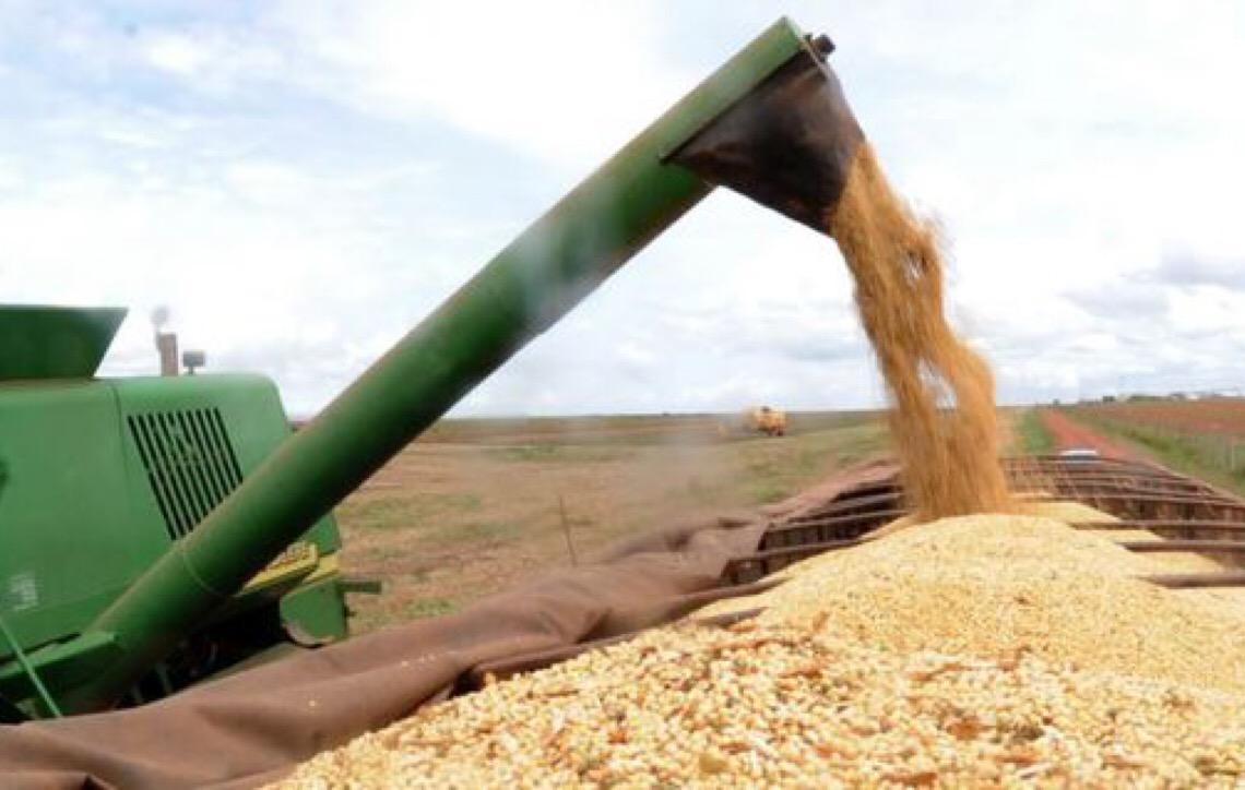 Segundo o IBGE a safra de grãos de 2019 deve ser 3,1% maior que a de 2018