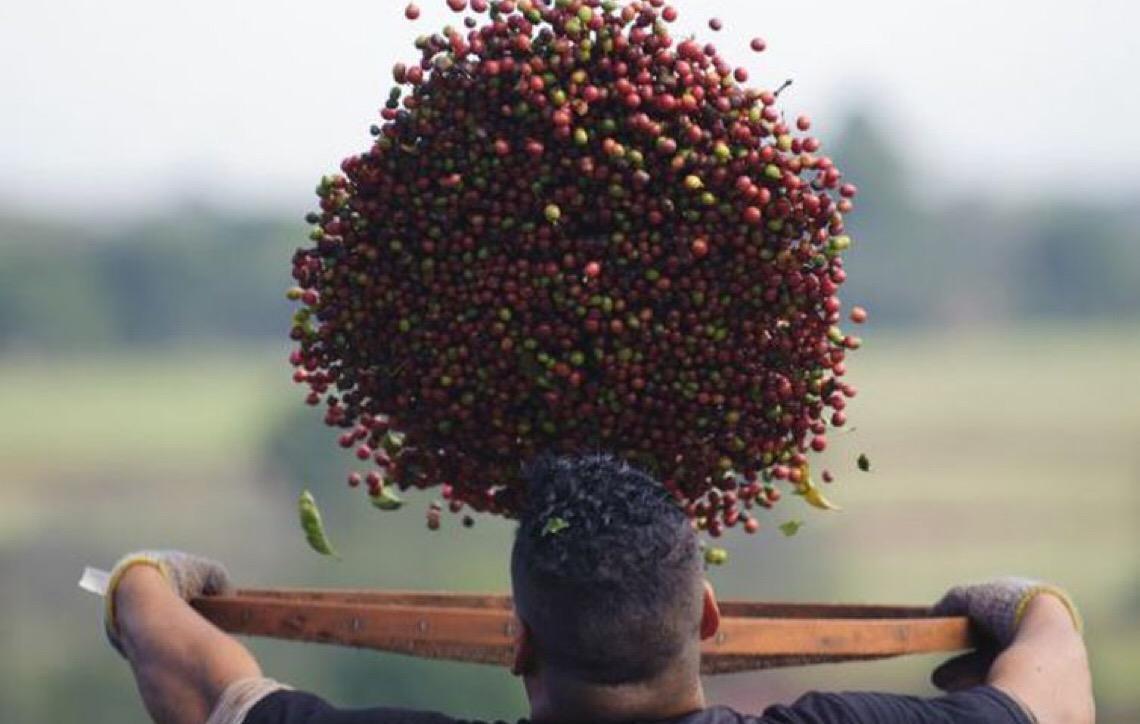 Cafeicultores brasileiros querem acordo com UE para expandir mercado