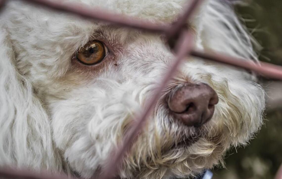 Crise leva venezuelanos a abandonar animais de estimação