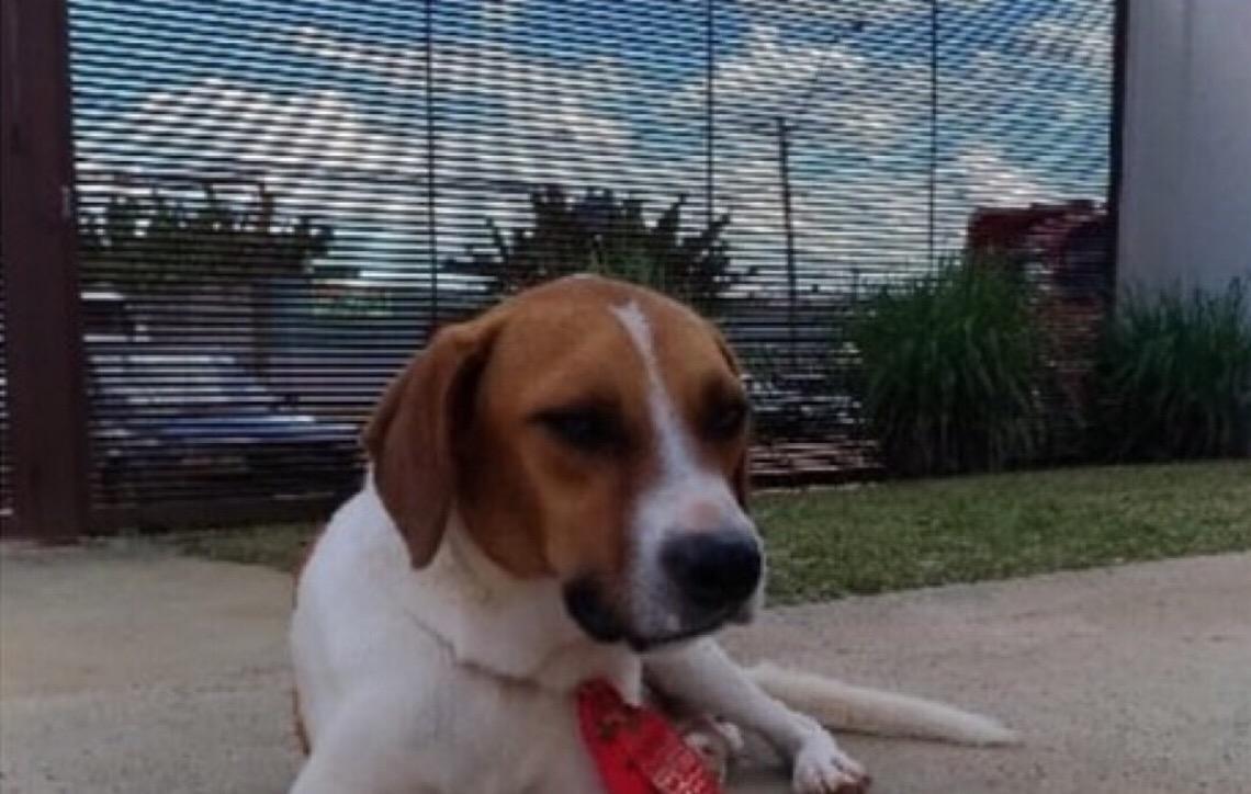 Aplicativo desenvolvido por estudantes de Brasília permite adoção de pets