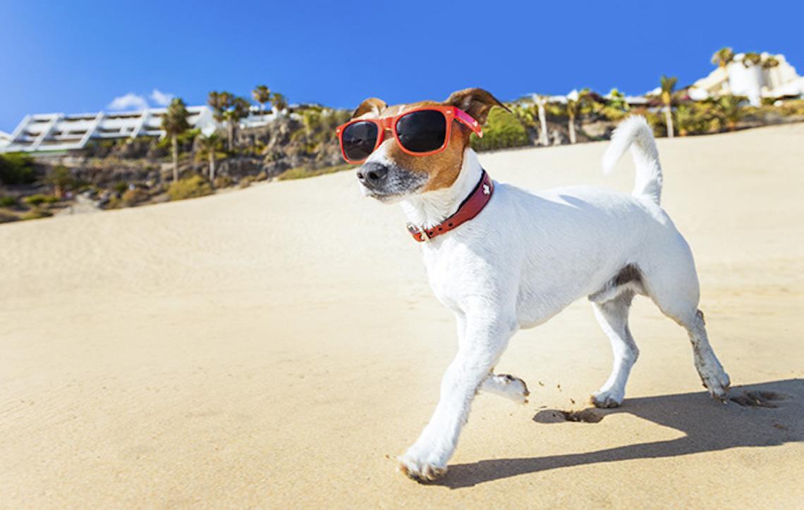 Casos de insolação em cães: o que fazer?