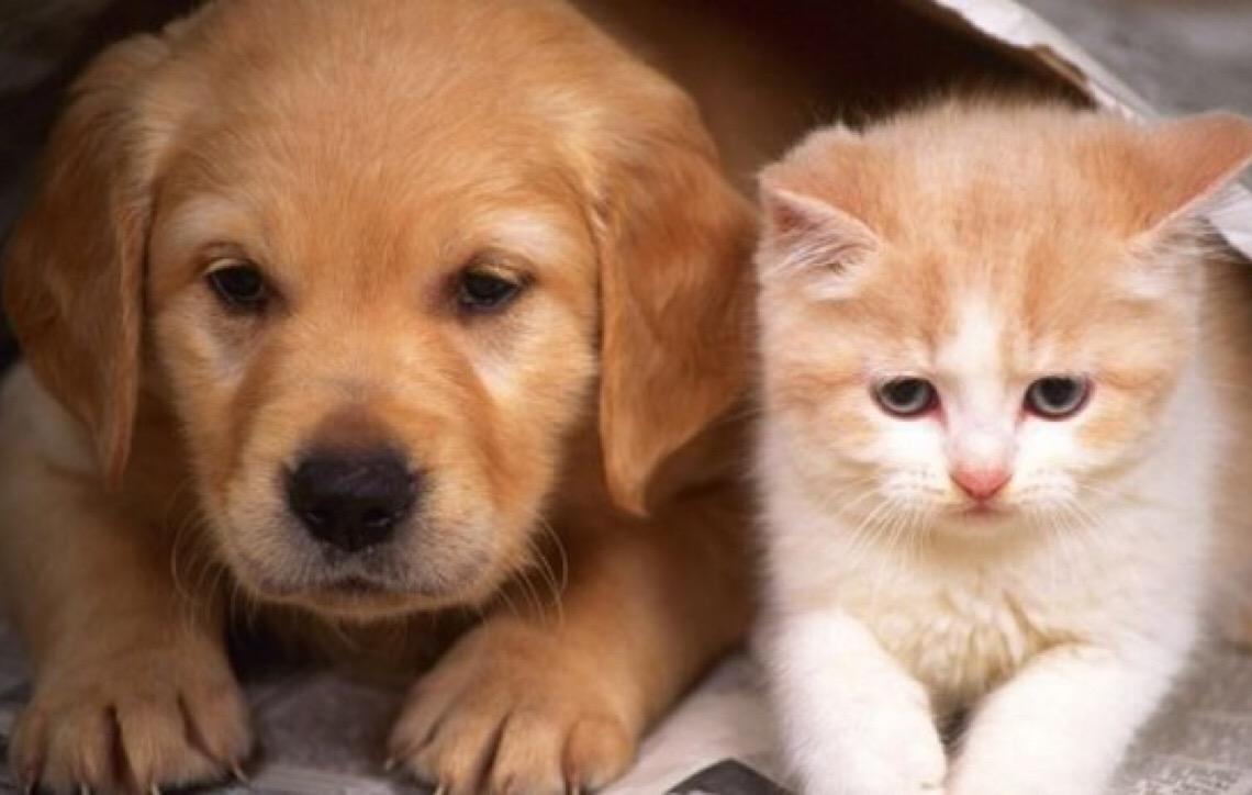 Brasília terá feira de adoção de animais neste sábado