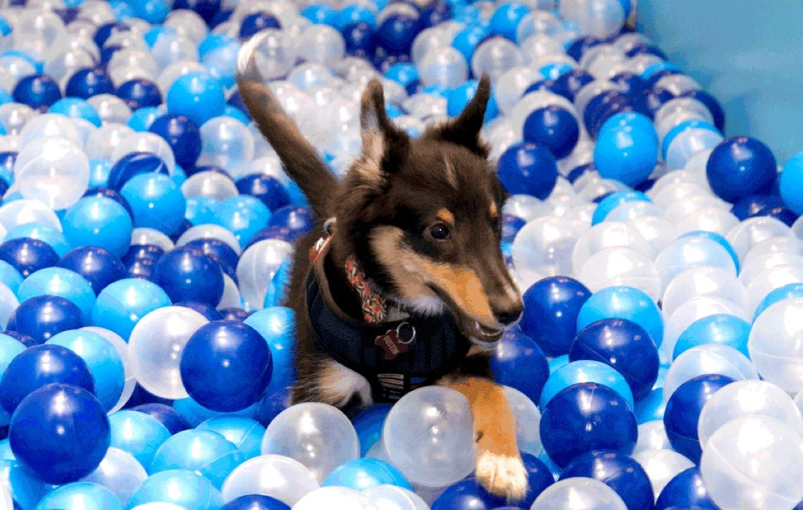 Pets ganham espaço para brincar em shopping de Brasília