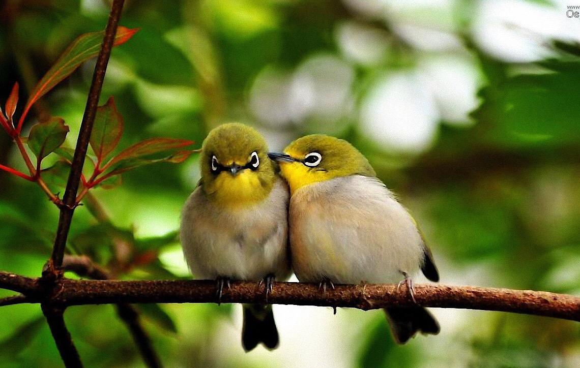 Cada civilização tem uma forma encantadora de abordar a beleza dos pássaros