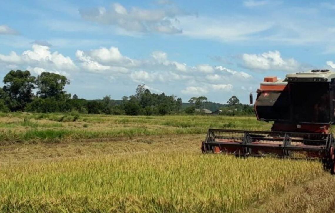 Capital do Brasil tem o maior rendimento do país na produção de cana-de-açúcar e feijão