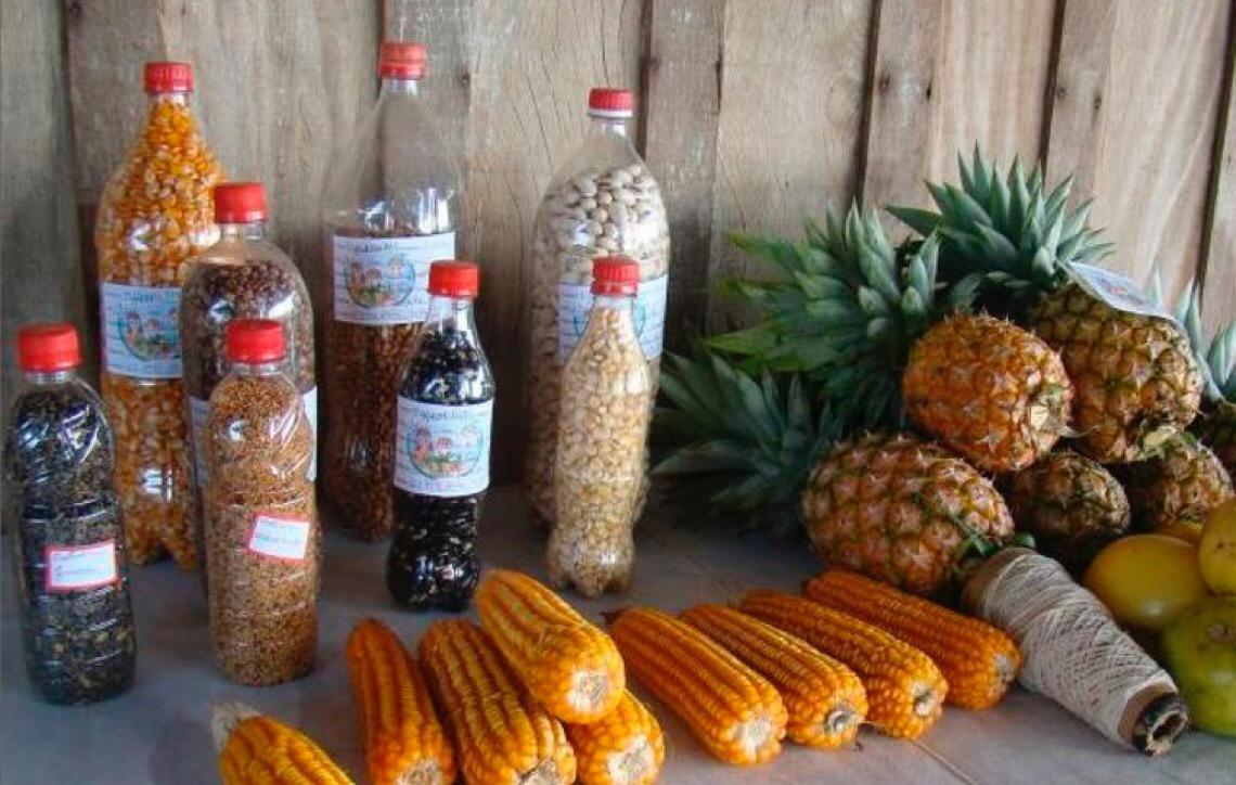 Agricultores familiares brasileiros debatem importância da semente crioula