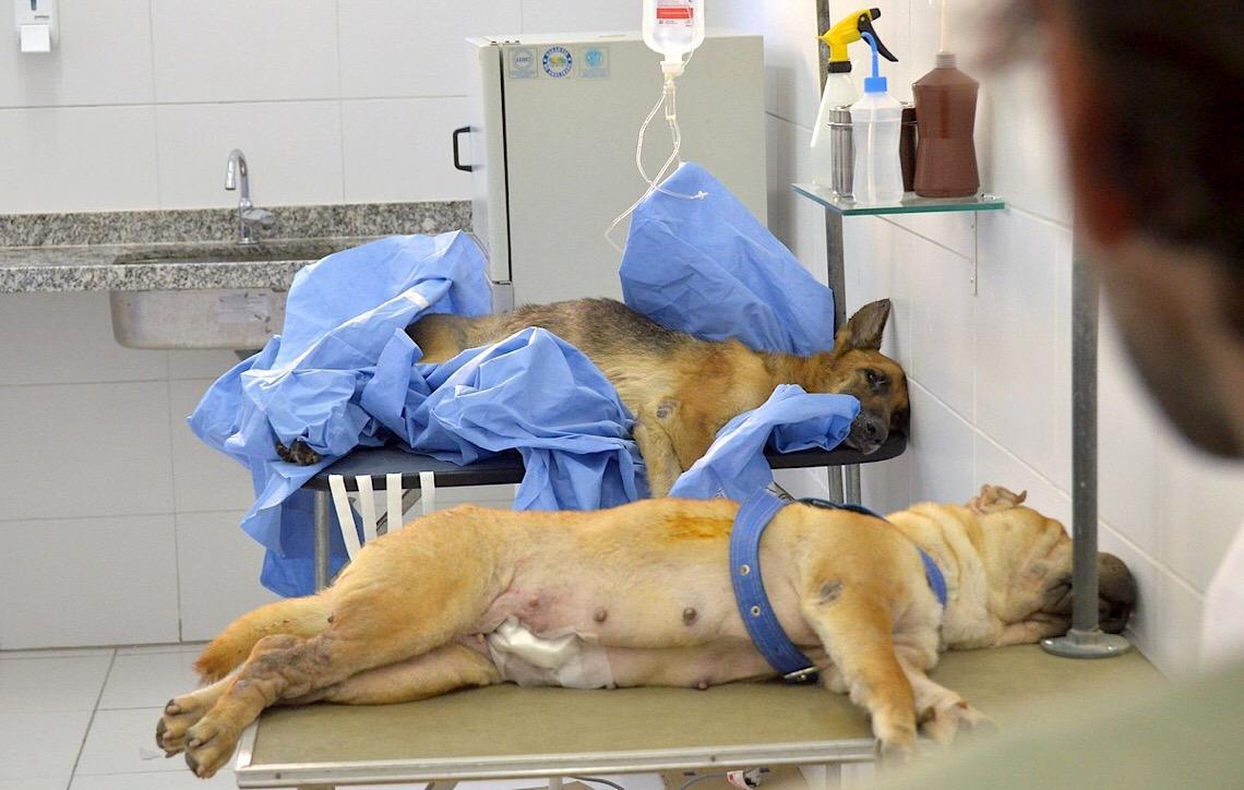 Em Brasília. Ibram abre 2,5 mil vagas para castrações gratuitas de cães e gatos
