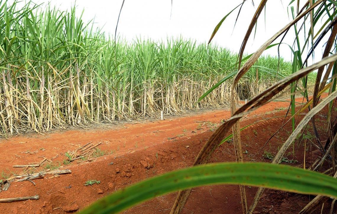Brasil recorre à Organização Mundial do Comércio por causa de subsídio da Índia ao açúcar