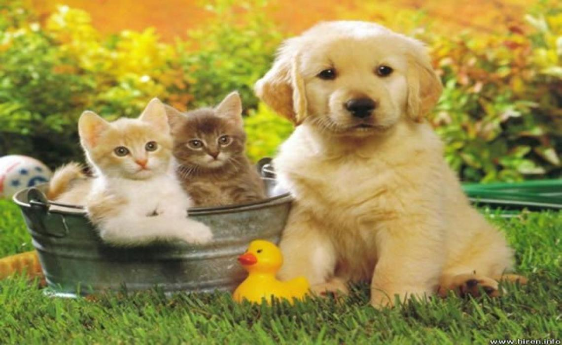 A espiritualidade dos animais de estimação