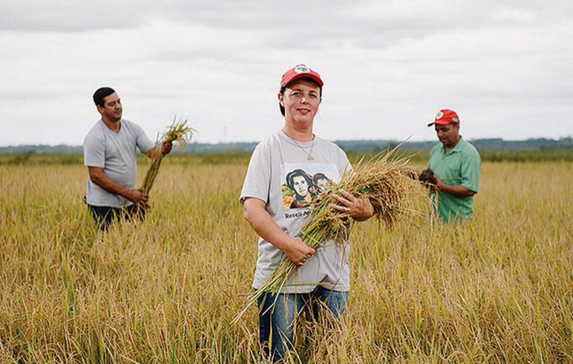 Conheça a maior produção de arroz agroecológico da América Latina, ligada ao Movimento dos Sem Terra