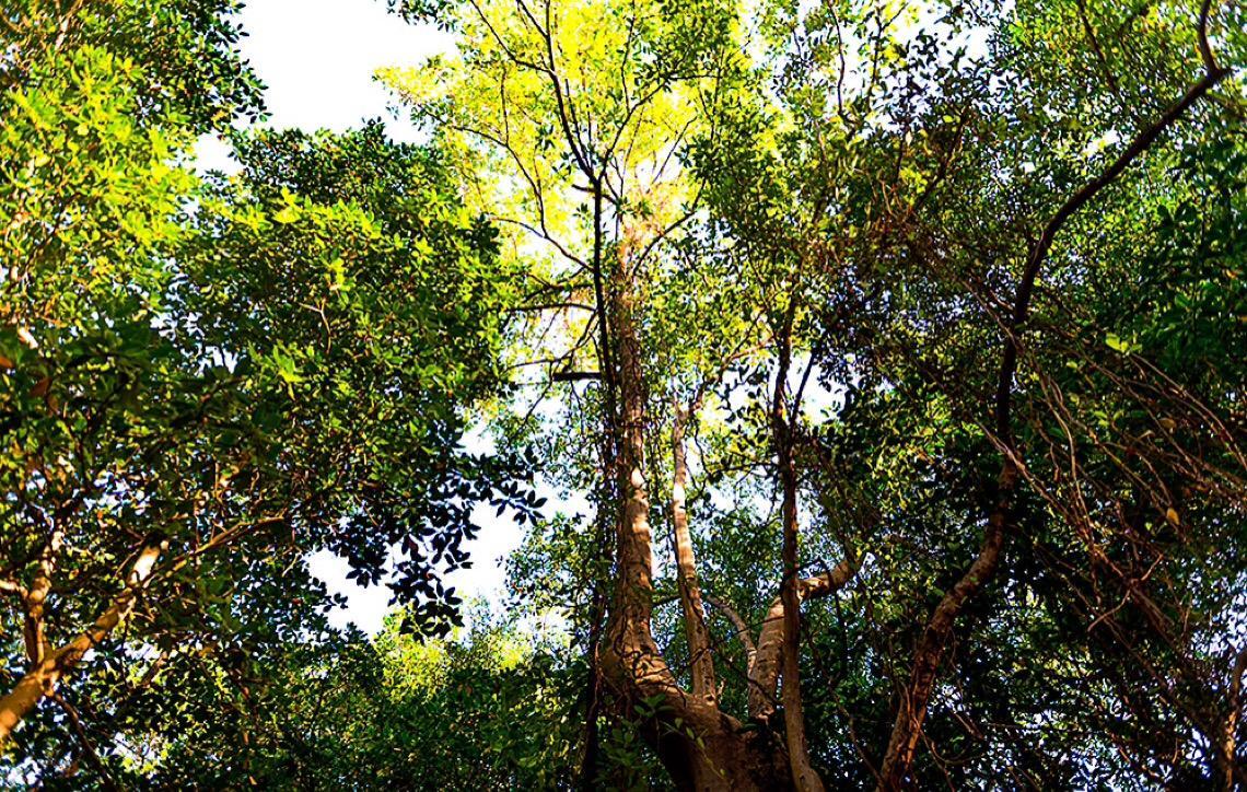 Amazônia e sua importância para o mundo