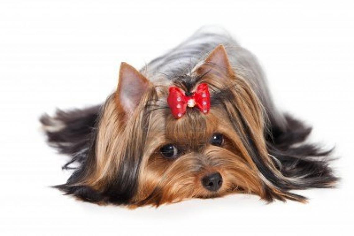 5 dicas para cuidar bem dos pelos do seu pet