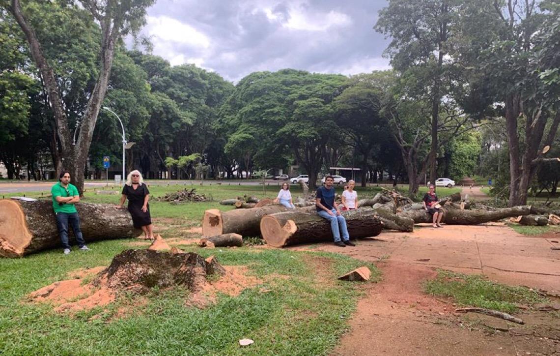 Justiça em Brasília suspende licença e empresa deve parar corte de árvore na quadra 208 Sul
