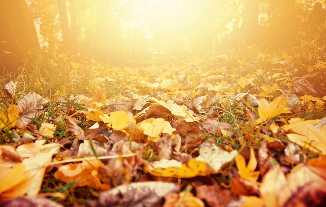 Outono. Doenças respiratórias e alergias se agravam nesta estação