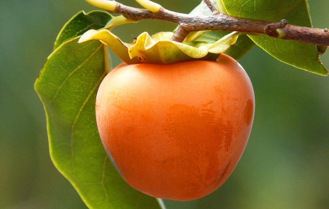Conheça os alimentos do outono e seus benefícios para a saúde