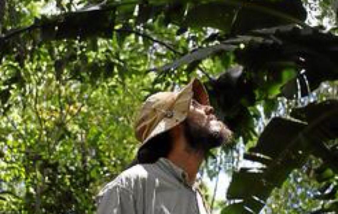 Aposta nas agroflorestas