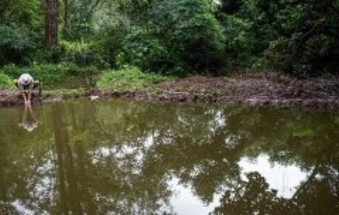 Ambientalista paulistano ajuda a criar lagos em aldeia indígena no Jaraguá