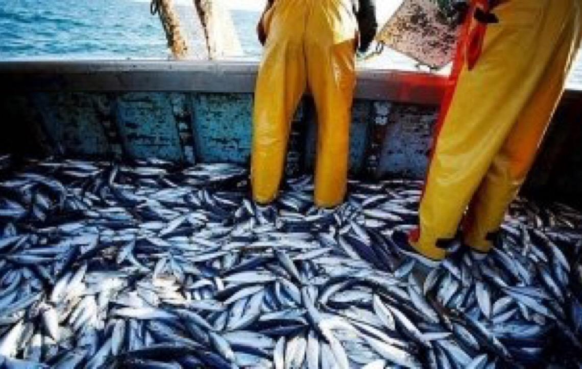 Estudo mostra que aquecimento das águas reduz população de peixes