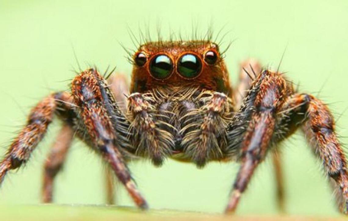 A aventura de alimentar a sua aranha pet