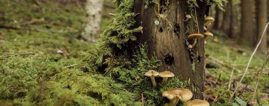 Fungo dizimou populações de 501 espécies de anfíbios no mundo