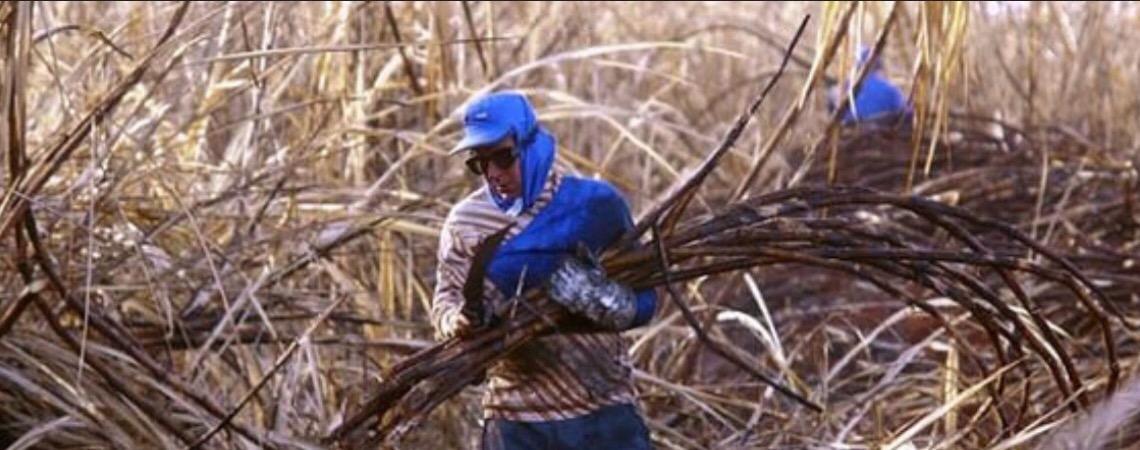 Brasil deixou de arrecadar R$ 2 bilhões com isenções a agrotóxicos em 2018