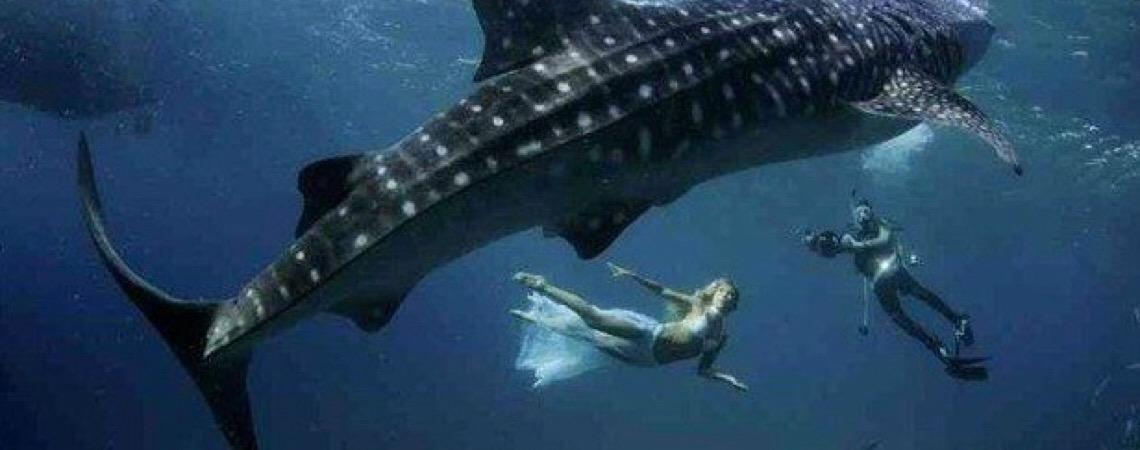 Tubarões valem mais vivos que mortos, só o Brasil ainda não sabe