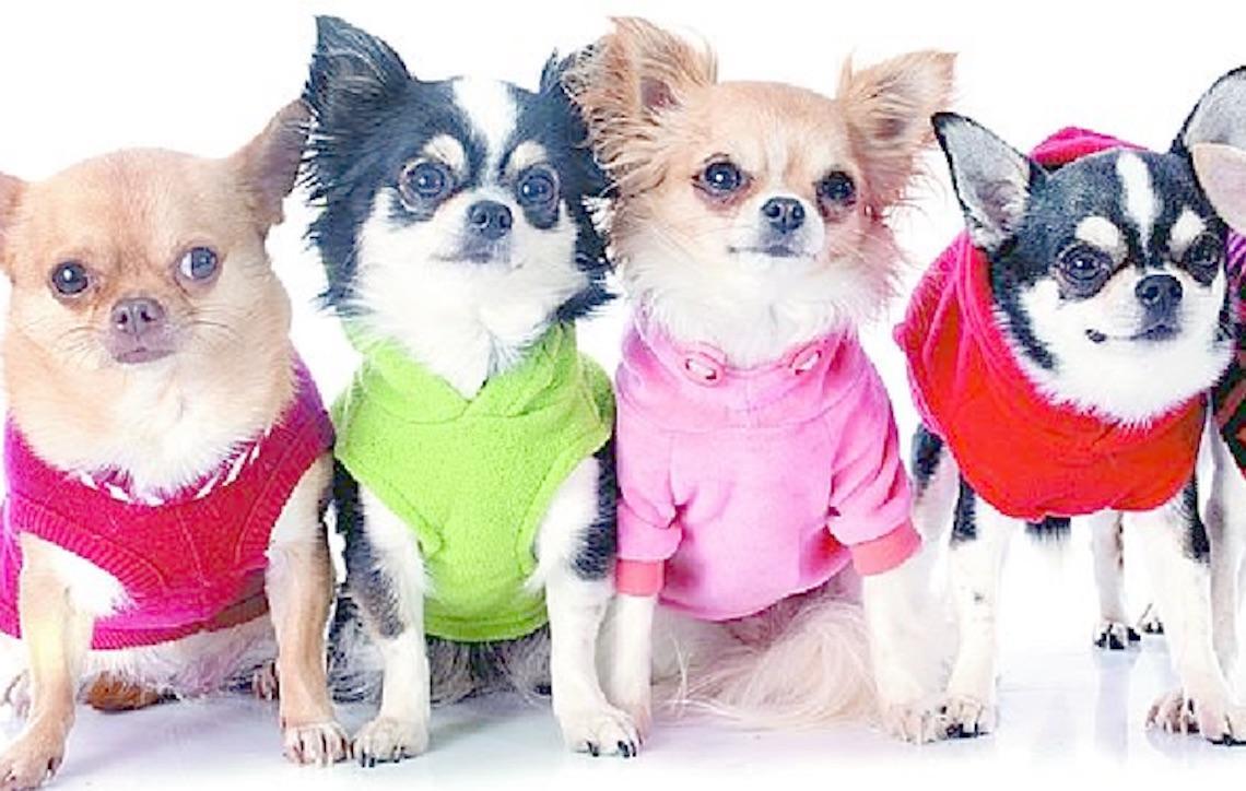 Saiba como proteger os animais contra o frio