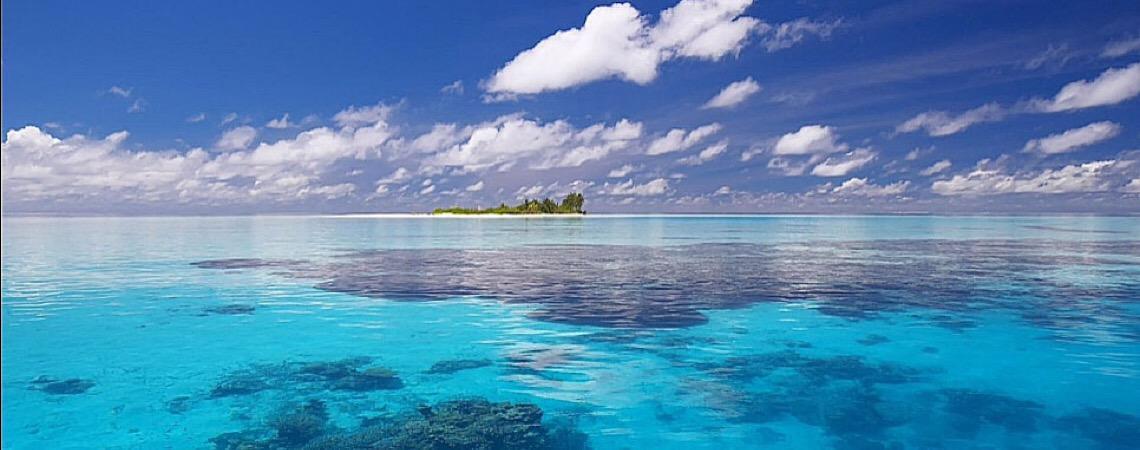 Carbono dos vertebrados marinhos, você sabe o que é?