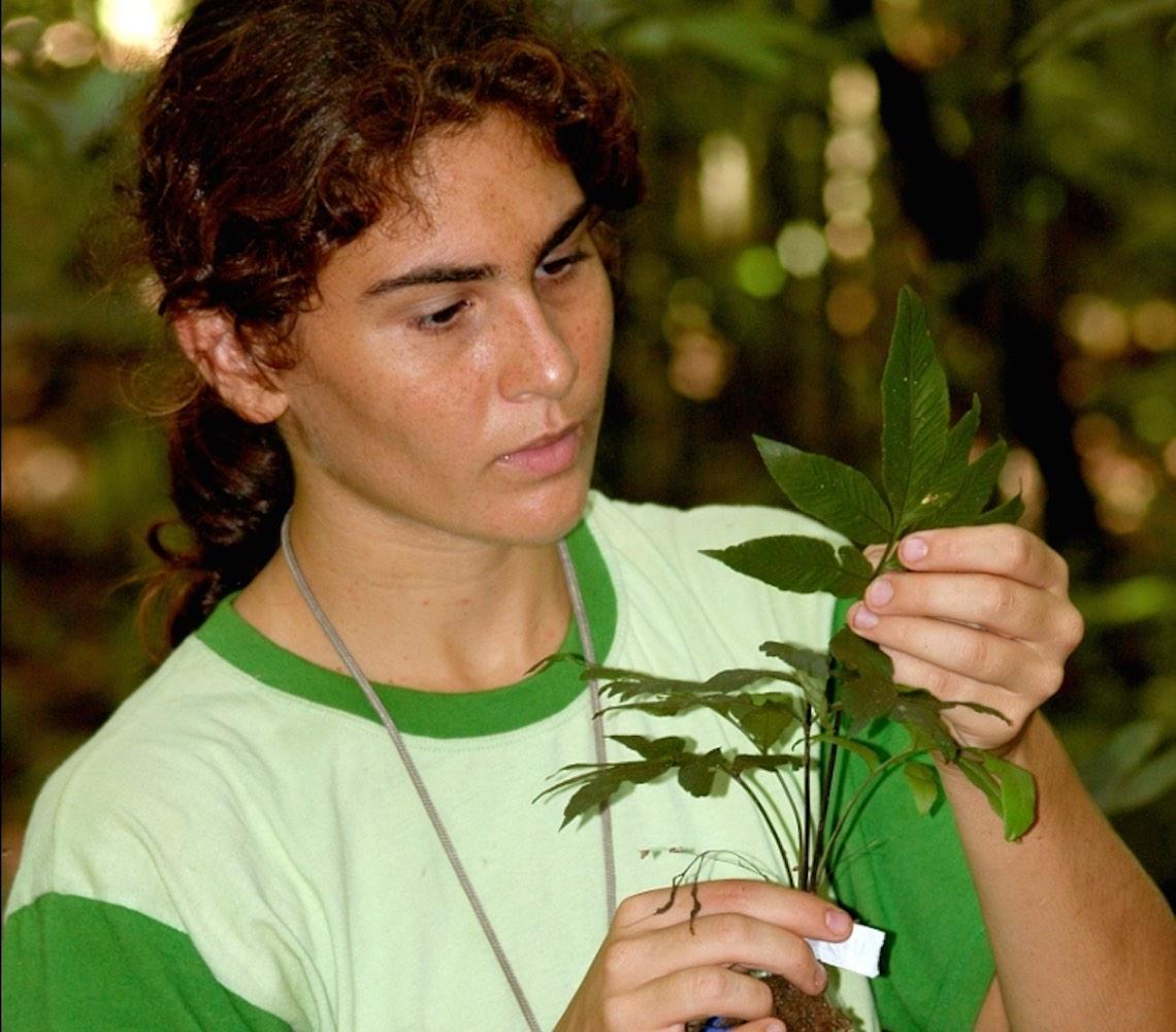 Samambaias são usadas como plantas indicadoras para mapear solos da Amazônia