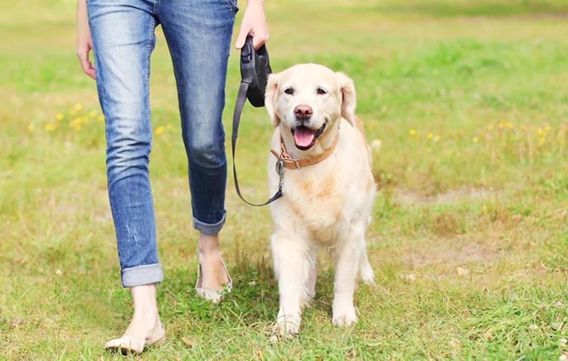 Quem tem cachorro se exercita mais