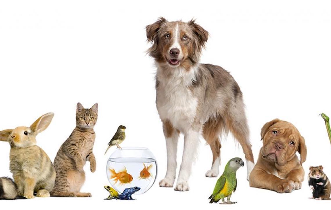 Alimentação para pets exóticos